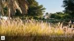 TYPE 1M - Arabian Ranches 2-Reem Community